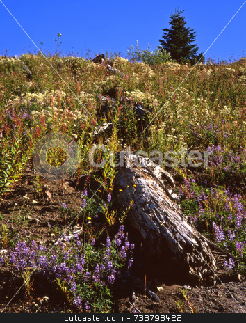 Wildflower Hillside stock photo, A hillside of wildflowers. by Mike Norton