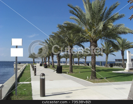 OceanPark stock photo, Rows of palm trees are neatly lined up inside a public park that is overlooking the ocean. by Rebecca Mosoetsa