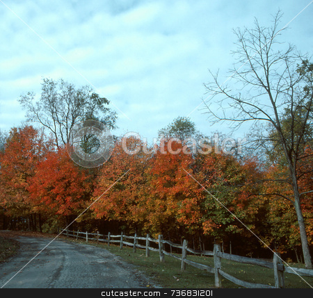 Autumn Drive--1 stock photo, Autumn-colored leaves cover trees along a country road. by Kathy Piper
