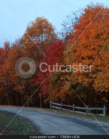 Autumn Drive--2 stock photo, Autumn-colored leaves cover trees along a country road. by Kathy Piper