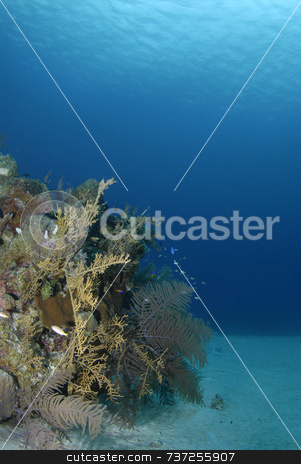 Soft Coral Underwater Background stock photo, Soft Coral Underwater Background by A Cotton Photo