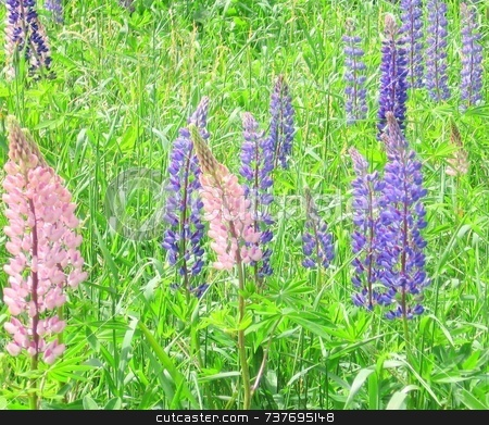 Wild Lupine stock photo, Wild Maine Lupine by Tom and Beth Pulsipher