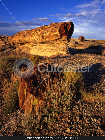 Petrified Rocks stock photo, Petrified logs in Petrified Forest National Park, Arizona. by Mike Norton