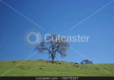 Oak tree on a grassy hilltop stock photo, An Oak tree on a grassy hilltop against a blue sky by Lynn Bendickson