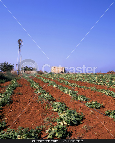 Irrigation ang growth stock photo, The red soil of a field in Cyprus with wind pumps providing irrigation by Paul Phillips