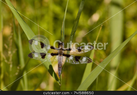 Dragonfly on a leaf stock photo, A very nice looking Dragonfly on a leaf. by Jean Larue-Frechette