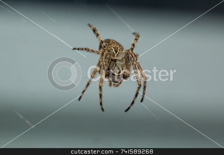 Spider Macro stock photo, Macro shot of a spider on it's web by Jean Larue-Frechette
