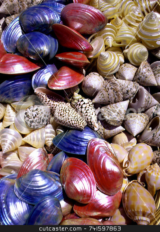 Sea Shells stock photo, Group of brightly coloured sea shells by Paul Phillips