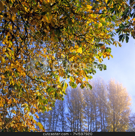 Autumn Leaves stock photo, Autumn Leaves on a bright day by Paul Phillips