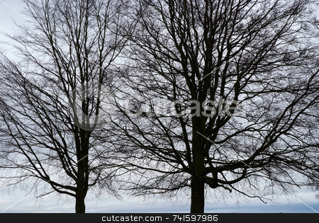 Misty Trees stock photo, Silhouette of trees showing through on a misty day by Paul Phillips