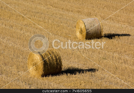 Bales in the field stock photo, Two hay bales in a field during harvest by Jean Larue-Frechette