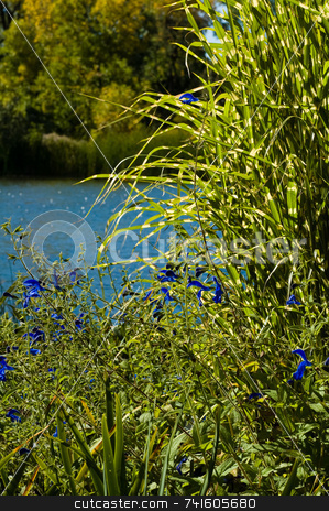 Lakeside nature stock photo, Green plants close-up with water in the background by Jean Larue-Frechette