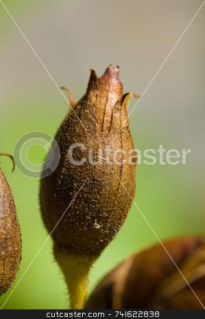 Flower bud stock photo, Close-up shot of a flower bud in a garden by Jean Larue-Frechette