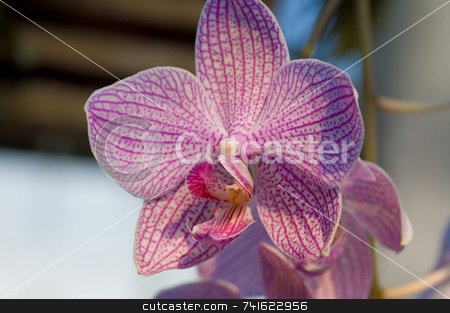 Pink orchid macro stock photo, Close-up shot of a flower in a garden by Jean Larue-Frechette