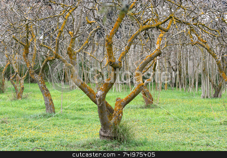 Bare Tree stock photo, A tree without leaves during autumn by Georgios Alexandris