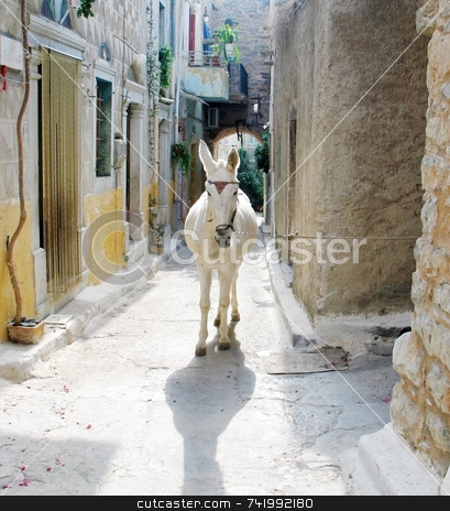 Donkey in Greek Village stock photo, A (backlit) donkey in a narrow alley of a village in the Greek island of Chios by Georgios Alexandris