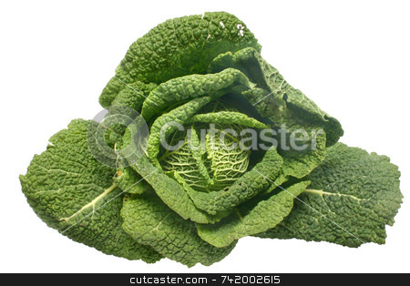 A Savoy cabbage stock photo, A Savoy cabbage by Stephen Rees