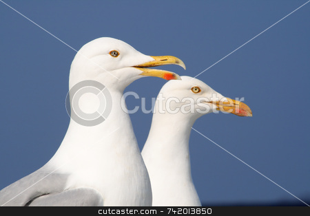 A seagull talking to his friend. stock photo, A seagull talking to his friend. by Stephen Rees