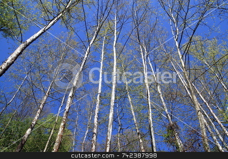 Tree stock photo, Trees  in the  sky prospective by Jack Schiffer
