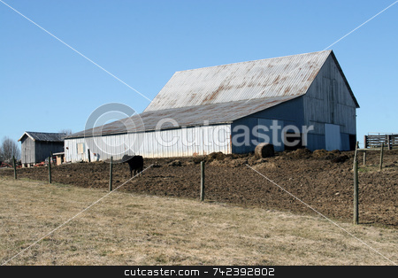 Farm Country stock photo, Barn and cow scene in Kentucky area by Jack Schiffer