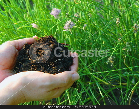 Rich Mulch stock photo, Rich mulch is the root of a well maintained garden by Jack Schiffer