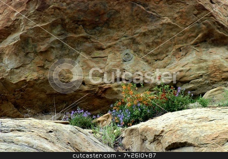 Wildflowers 6349 stock photo, Wildflowers in the Santa Susana Mountains by Henrik Lehnerer
