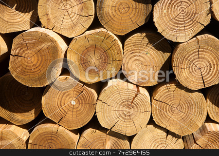 Close up of a stack of cut logs. stock photo, Close up of a stack of cut logs. by Stephen Rees