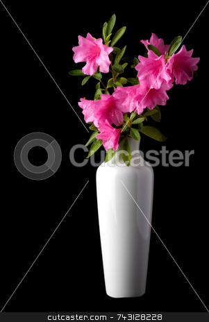 Pink azaleas in a white vase stock photo, Fresh cut pink azaleas in a white vase by Vince Clements