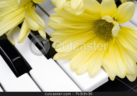 Yellow flower on a piano stock photo, Closeup of a yellow flower on a piano keyboard by Vince Clements