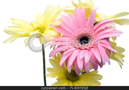 High key flowers stock photo, High key pink and yellow flowers on white by Vince Clements