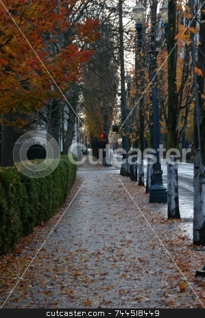 Leaves on the road stock photo, Leaves on a sidewalk in Portland Oregon by Tim Markley
