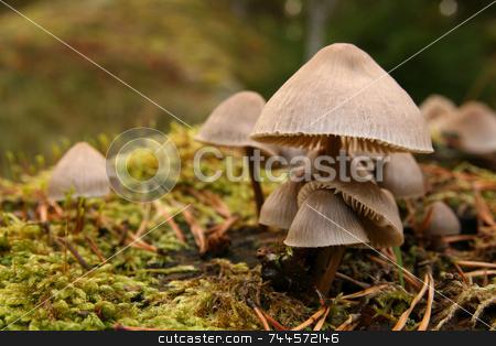Mushroom stock photo,  by Kjell Westergren