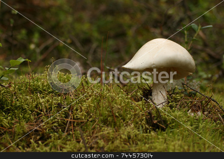 Mushroom stock photo,  by Kjell Westergren