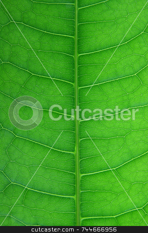 Leaf stock photo, Leaf close-up by Kjell Westergren