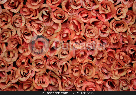 Dried Red stock photo, Many red dried roses grouped together by Paul Phillips