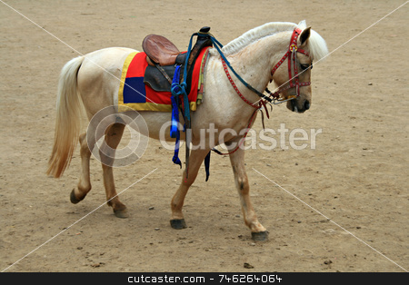 White horse stock photo, White horse with a saddle ready for a ride by Jonas Marcos San Luis