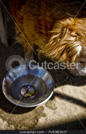 Homeless stock photo, A homeless man's dog walks away after drinking from a bowl. by Brett Benham