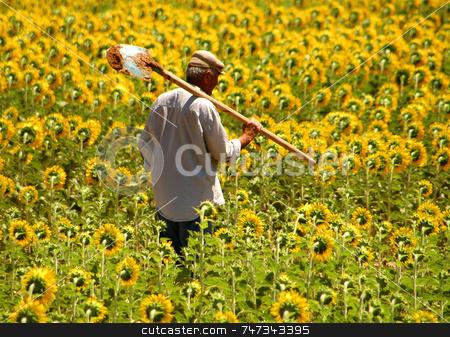 Farmer stock photo, Turkish farmer in sunflower field by Kobby Dagan