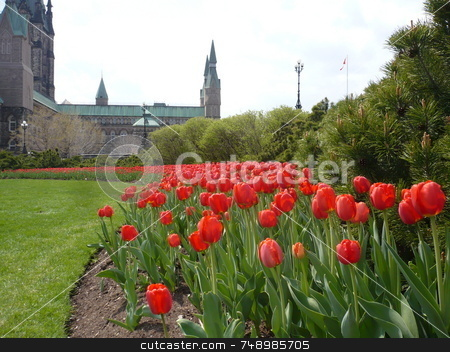 Tulips Of May stock photo, Ottawa's Parliament Hill and some of the  many fine flowerbeds there. by Michael Ge . . . .
