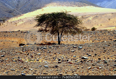 Tree In The Desert stock photo, Tree in the sahara desert in mauritania by Kobby Dagan