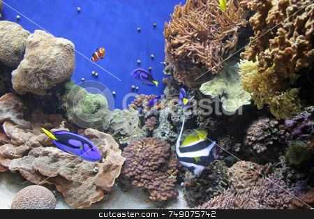 Monterrey Aquarium 9 stock photo, Fish in aquarium by Darryl Brooks