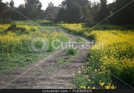 Flowery dirt road stock photo, A dirt path lined with wild flowers by Rob Wright