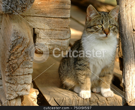 Cat stock photo, Spotted cat stand in the entrance of a house by Kobby Dagan