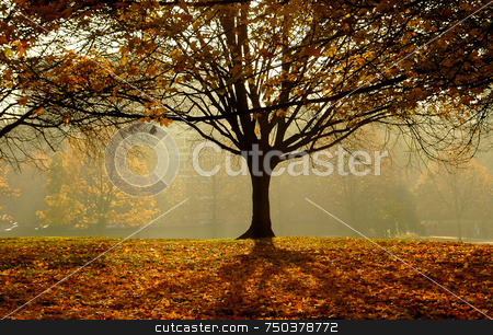 Autumn stock photo, An autumn day morning in the park by Kobby Dagan