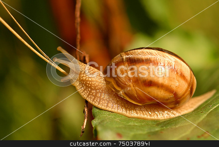 Snail stock photo, Close up on snail in the field by Kobby Dagan