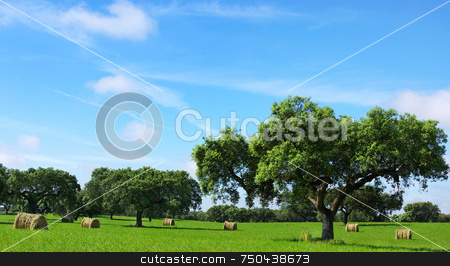Hay bayle in the field . stock photo, Hay bayle in the field of Portugal. by Inacio Pires