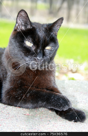 Elderly Black Cat stock photo, A 20 year old cat, relaxing outside by Tom and Beth Pulsipher