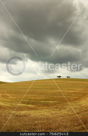 Dry field of wheat . stock photo, Dry field of wheat in alentejo with green tree. by Inacio Pires