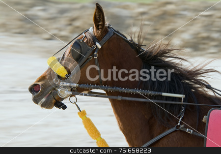 Riding horse stock photo, Riding horse in harness racing by Massimiliano Leban