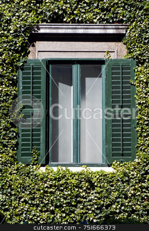 Window and ivy stock photo, Open green window surrounded by climber ivy by Massimiliano Leban